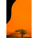 056. Desierto de Namib