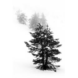 063. Pinar de Lillo nevado, León.