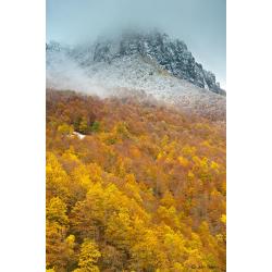 Asturias bosques de encanto