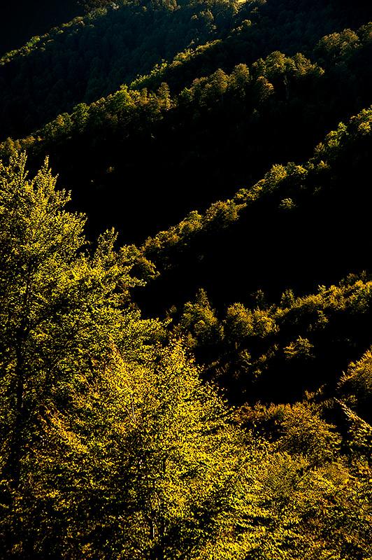 Bosque de Peloño, Asturias, Spain