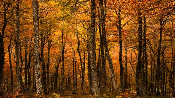 Bosques de encanto