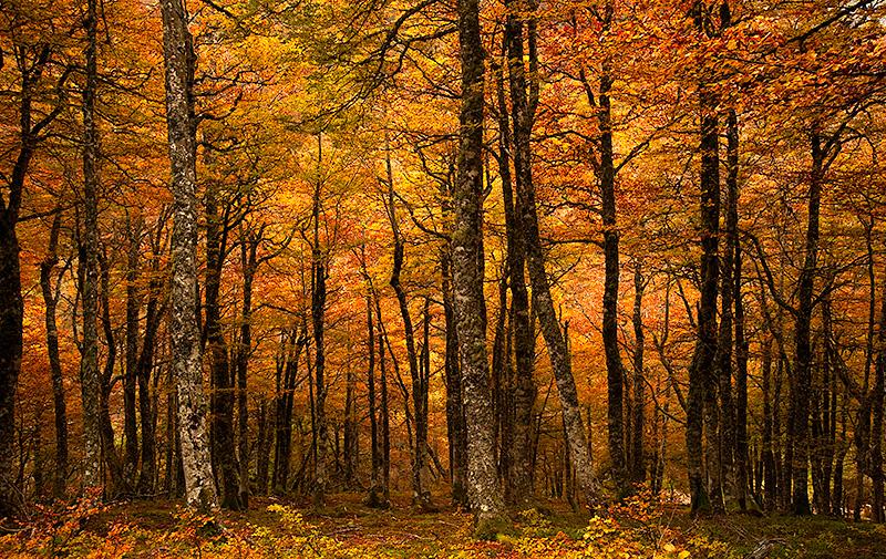 Bosque de La Salguerosa, Parque Natural de Ponga, Asturias, Spain.