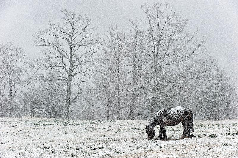 Paisaje nevado Teverga, Asturias.