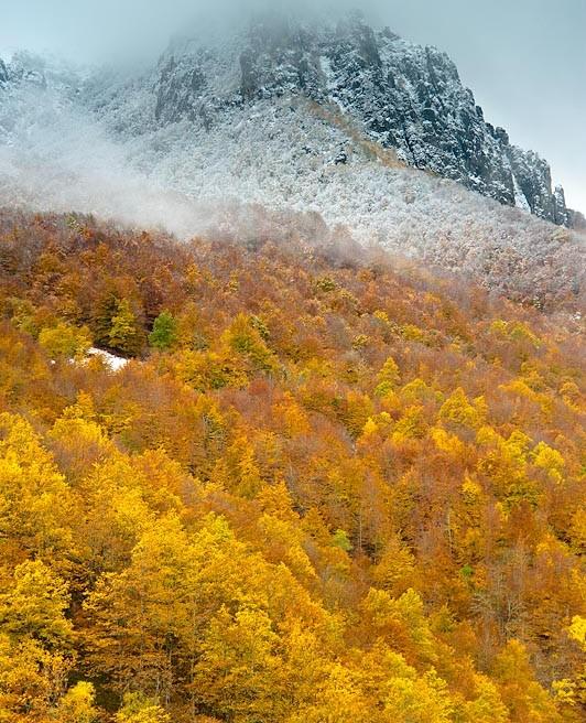 Bosques de encanto: el bosque atlántico