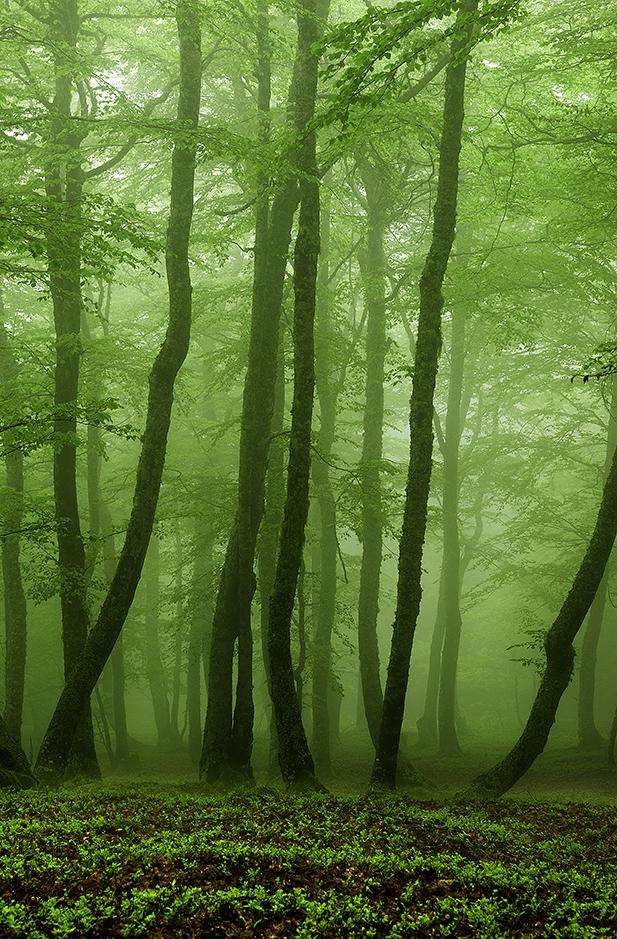 Primavera en el bosque del Parque Natural de Redes.