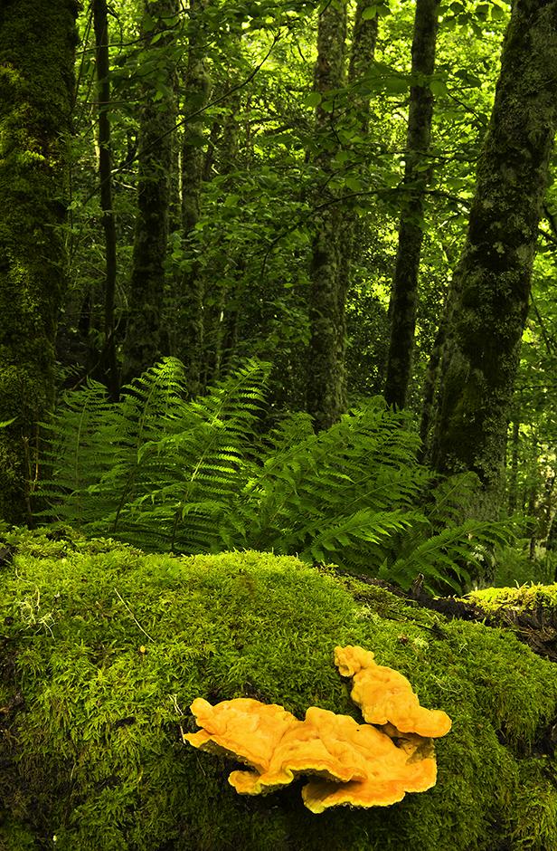 Bosque de Monasterio de Hermo. Parque Natural de las Fuentes del Narcea, Degaña e Ibias.