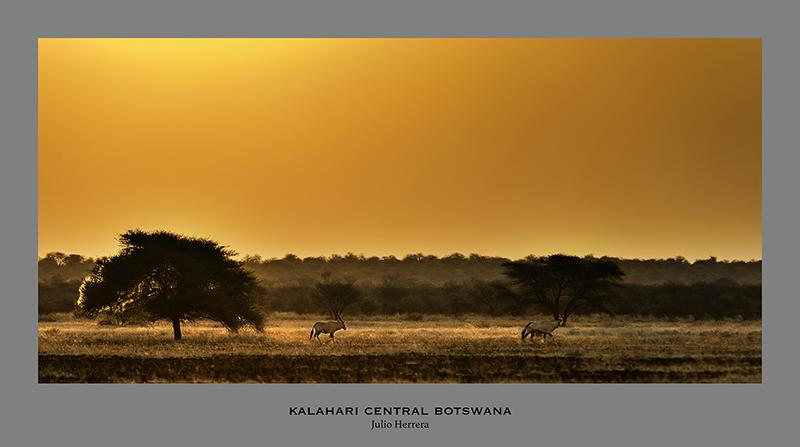 Atardecer en el Kalahari central. Botswana.