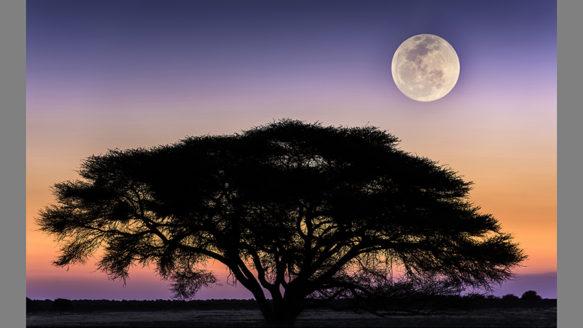 África, paisaje y naturaleza