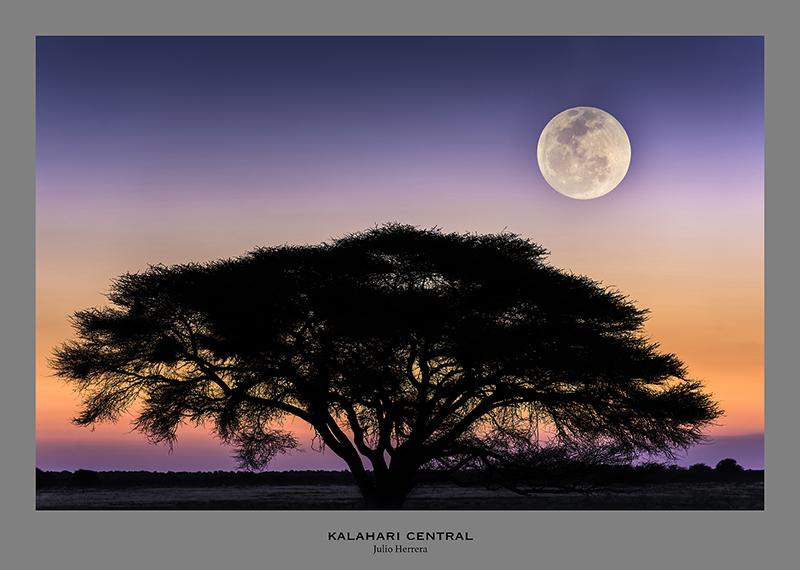 Desierto de Kalahari Central. Namibia, Sudafrica y Boswana