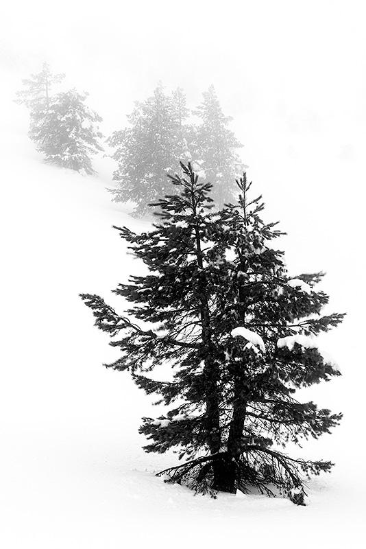 Pinar de Lillo en paisaje nevado. León
