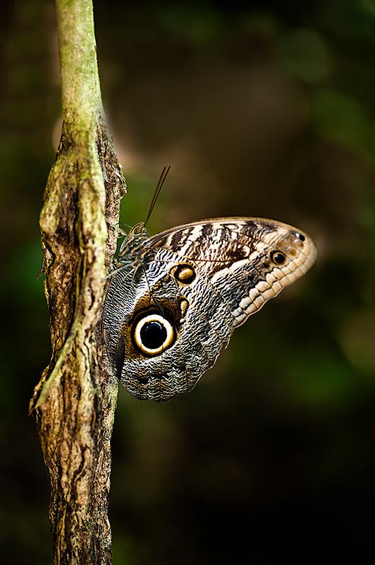 Parque Natural de Tayrona, Colombia.