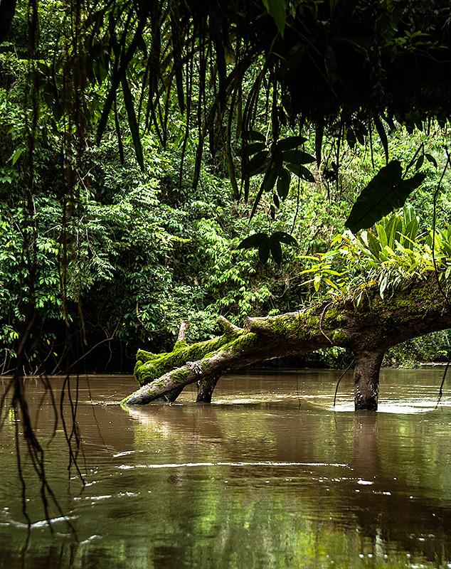 Parque Natural de Cuyabeno, Ecuador.