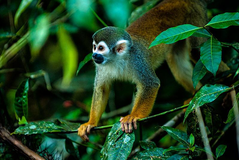 Parque Natural de Cuyabeno, Ecuador