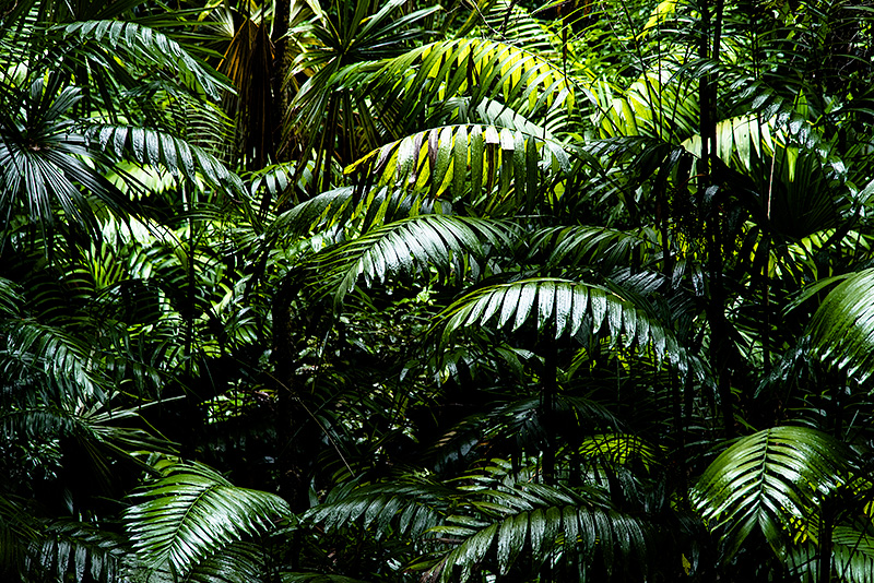 Selva del Petén, Guatemala.