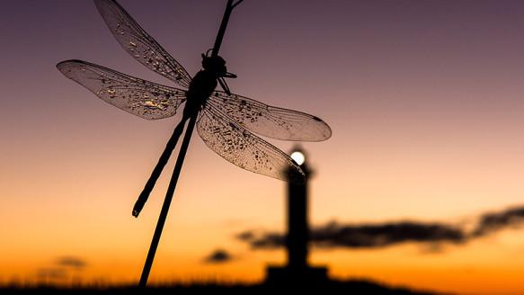Faros: luces del mar