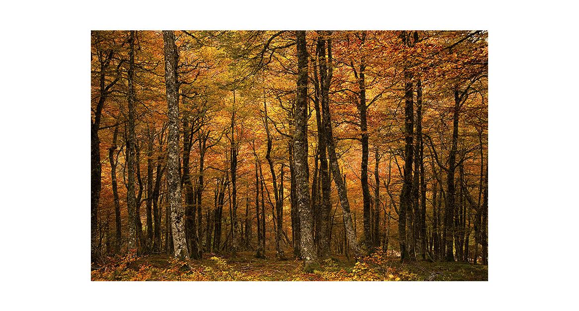 Bosque Cantábrico