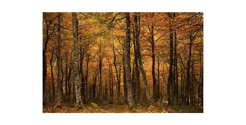 bosques_portadaporfolio